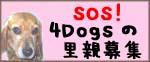 d0048194_0495832.jpg