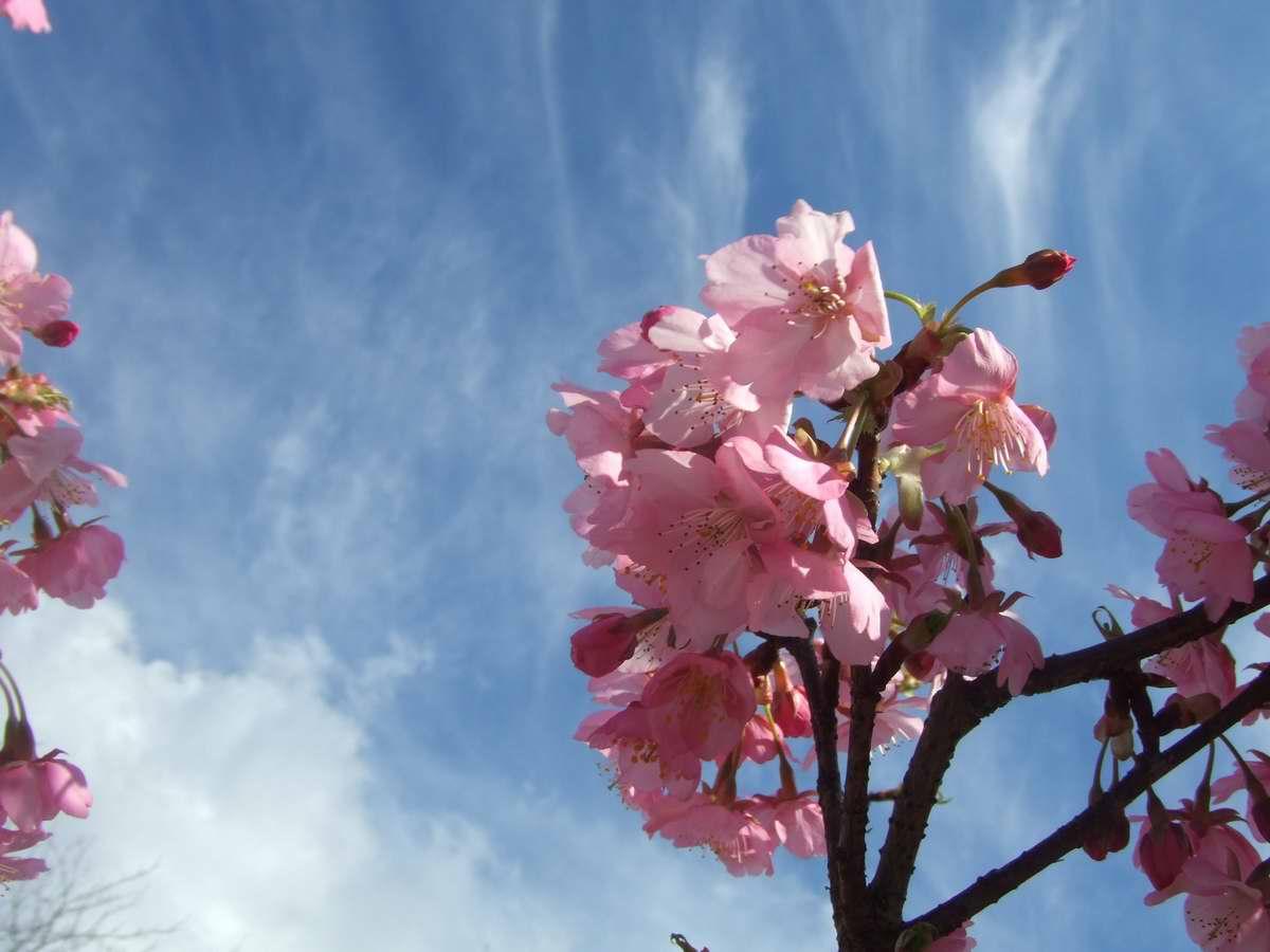 春ですね_d0004728_6211696.jpg