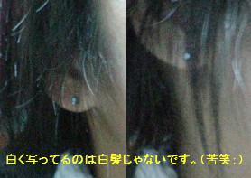 f0000008_2034387.jpg