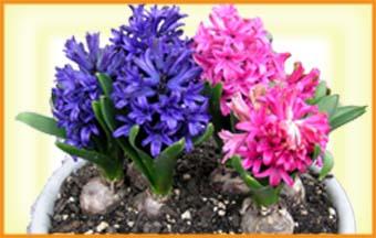 もうすぐ春です・・・。_f0045132_17122016.jpg