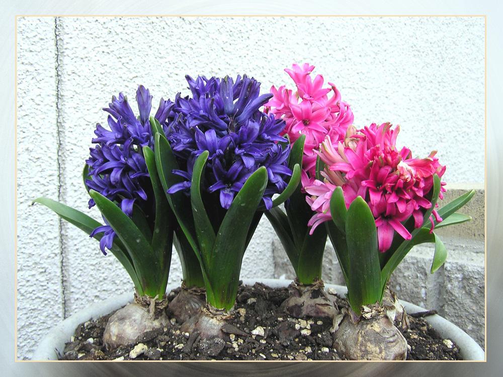 もうすぐ春です・・・。_f0045132_179404.jpg