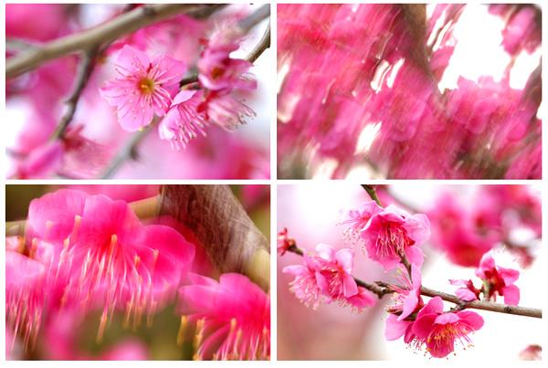 春一番_a0003650_15351061.jpg