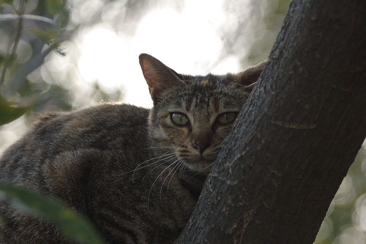 公園の猫_f0021869_9313735.jpg