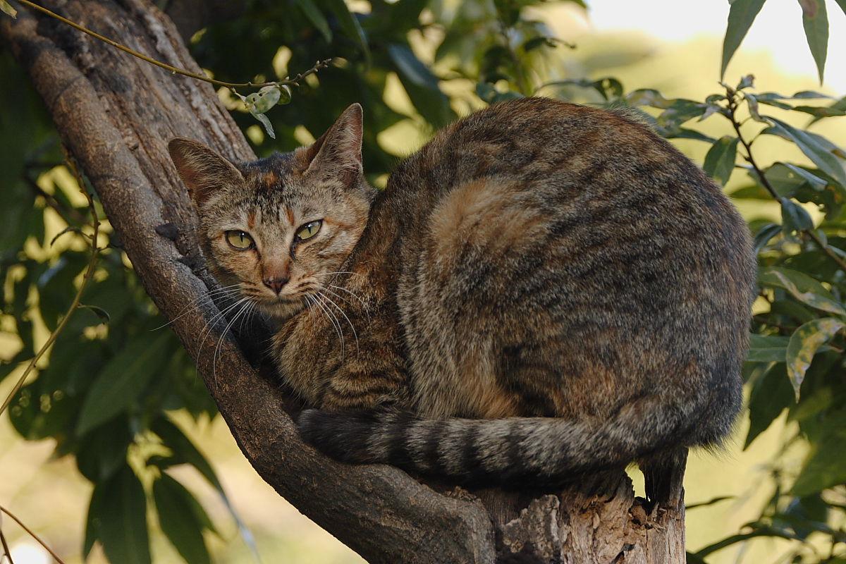 公園の猫_f0021869_931623.jpg