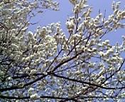 春一番_c0060412_17524954.jpg