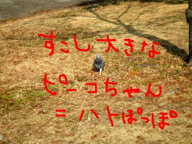 f0059334_912625.jpg