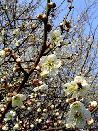 梅の香り_d0000274_1945308.jpg