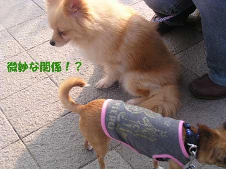 c0019050_1718369.jpg
