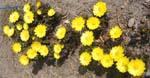 待ちに待った春です、やっとこさ、ぶどうがの芽が動き出しました。_d0026905_13454959.jpg