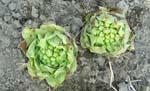 待ちに待った春です、やっとこさ、ぶどうがの芽が動き出しました。_d0026905_13455933.jpg
