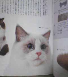 リンダちゃん~_e0033609_1332951.jpg