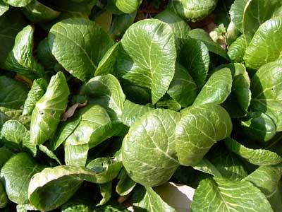 色々な野菜が_d0066822_1714156.jpg