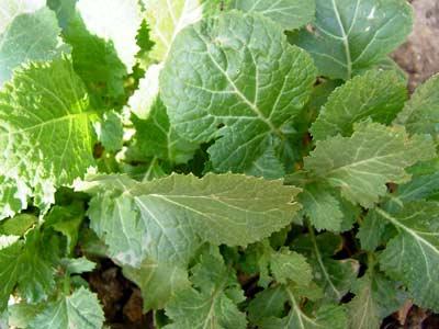 色々な野菜が_d0066822_17144881.jpg