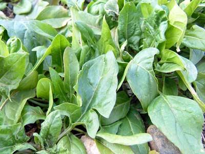 色々な野菜が_d0066822_17172726.jpg
