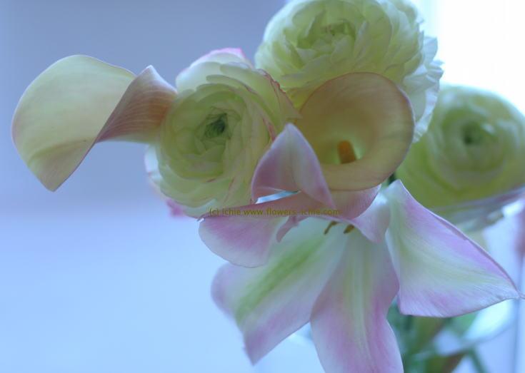 シンクロ・・・春の日に_a0042928_2312835.jpg