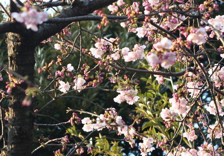 シンクロ・・・春の日に_a0042928_2313715.jpg