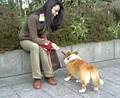 お散歩_c0060412_12395411.jpg