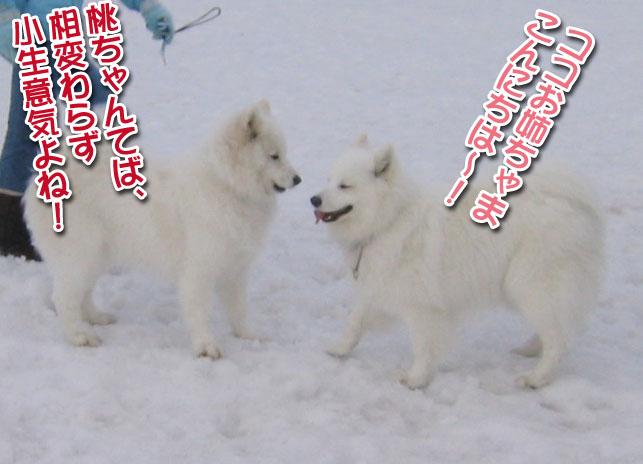 ココちゃんとカロンちゃん_a0044521_21272880.jpg