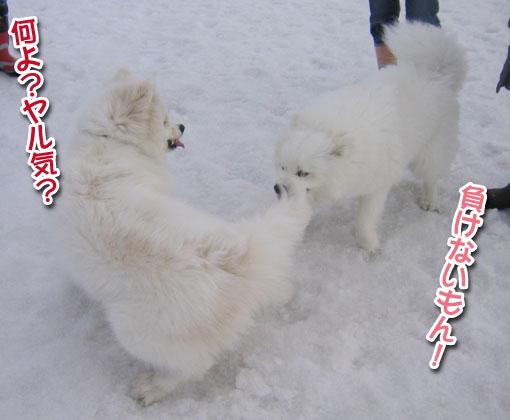 ココちゃんとカロンちゃん_a0044521_21284024.jpg