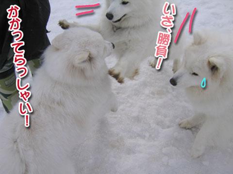 ココちゃんとカロンちゃん_a0044521_212962.jpg
