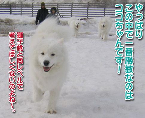 ココちゃんとカロンちゃん_a0044521_21301717.jpg