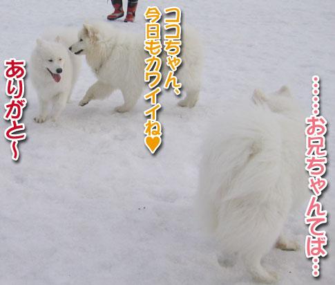 ココちゃんとカロンちゃん_a0044521_213218100.jpg