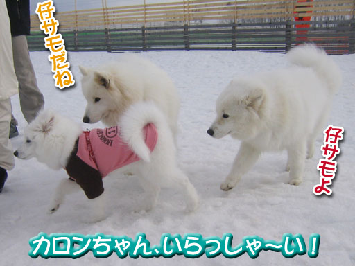 ココちゃんとカロンちゃん_a0044521_21361696.jpg
