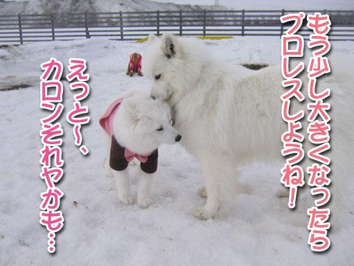 ココちゃんとカロンちゃん_a0044521_21372922.jpg
