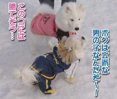 ココちゃんとカロンちゃん_a0044521_21403924.jpg
