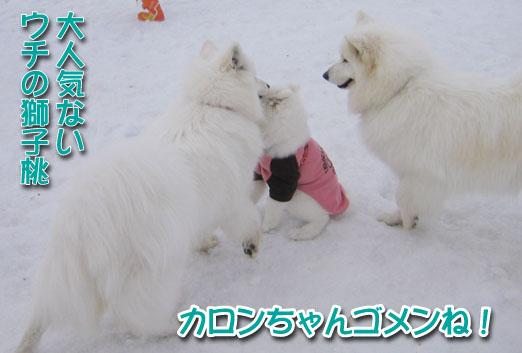ココちゃんとカロンちゃん_a0044521_21415962.jpg