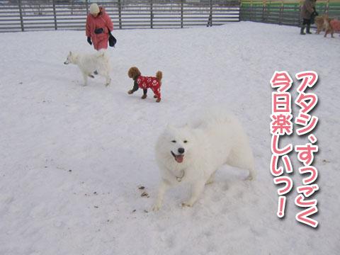 ココちゃんとカロンちゃん_a0044521_21425438.jpg