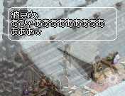 b0032347_10414849.jpg