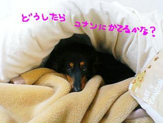 f0047369_1844398.jpg