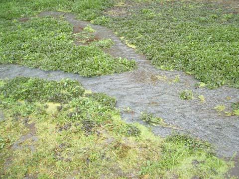 正確な情報:山の水源のおたまじゃくし 2006/3/11_c0052876_0121392.jpg