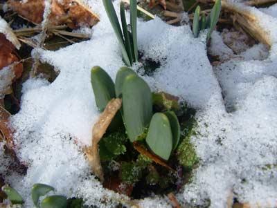 春の雪_d0066822_918549.jpg