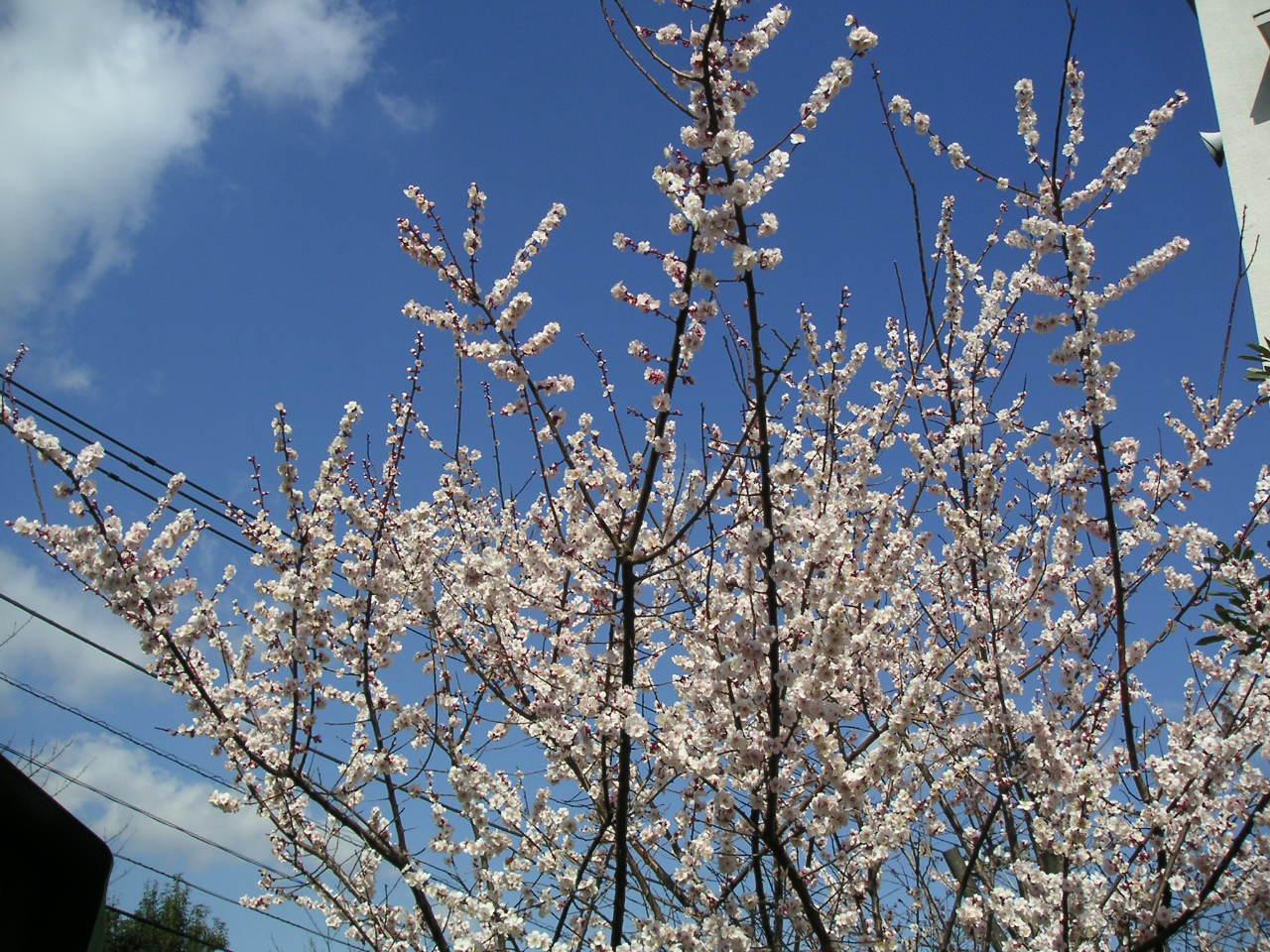 花粉がとんでくる_e0017093_19473428.jpg