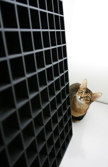[猫的]コンラン卿の選択眼_e0090124_12573375.jpg
