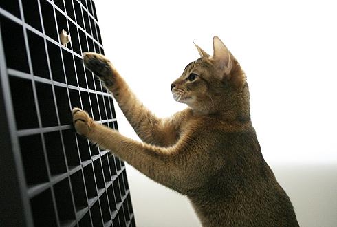 [猫的]コンラン卿ゴメンナサイ_e0090124_11203249.jpg