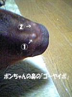e0027529_938129.jpg