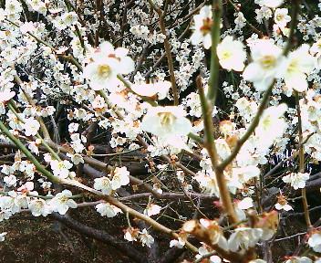 春ですね! 日曜日はVENTO DO BRASIL☆_b0032617_11591176.jpg