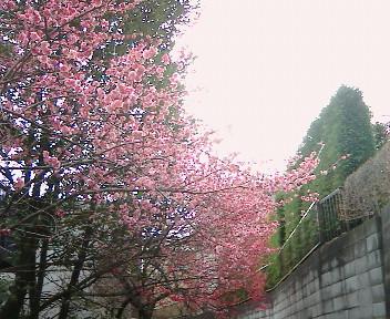 春ですね! 日曜日はVENTO DO BRASIL☆_b0032617_1243480.jpg