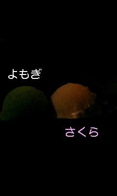 d0044736_1703350.jpg