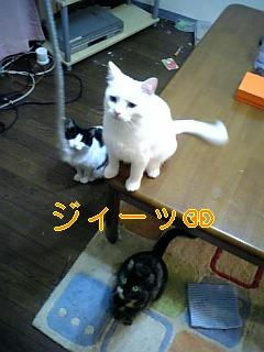f0082938_2216309.jpg