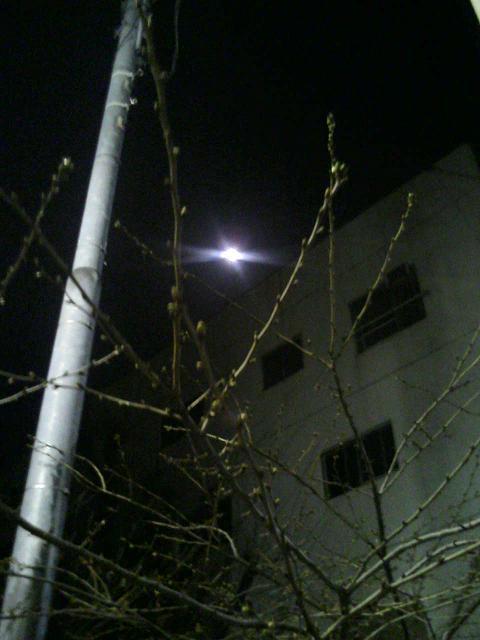 月と桜_e0013944_22104719.jpg