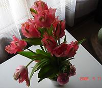 c0032171_1733259.jpg