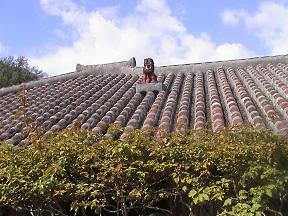 はじめての沖縄・その2_d0066127_16204242.jpg
