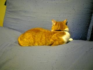 猫は拗ねる_b0019333_1412469.jpg