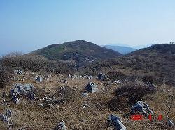 思い出の山 藤原岳の福寿草登山は4月に入ってからがお勧め_d0055236_19333445.jpg