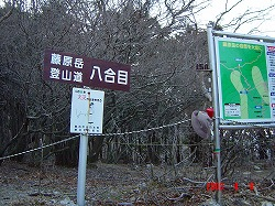 思い出の山 藤原岳の福寿草登山は4月に入ってからがお勧め_d0055236_19334988.jpg