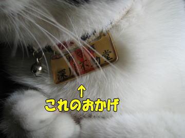 b0041182_1021148.jpg